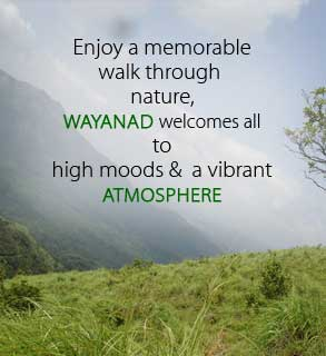 Hotels And Resorts In Wayanad