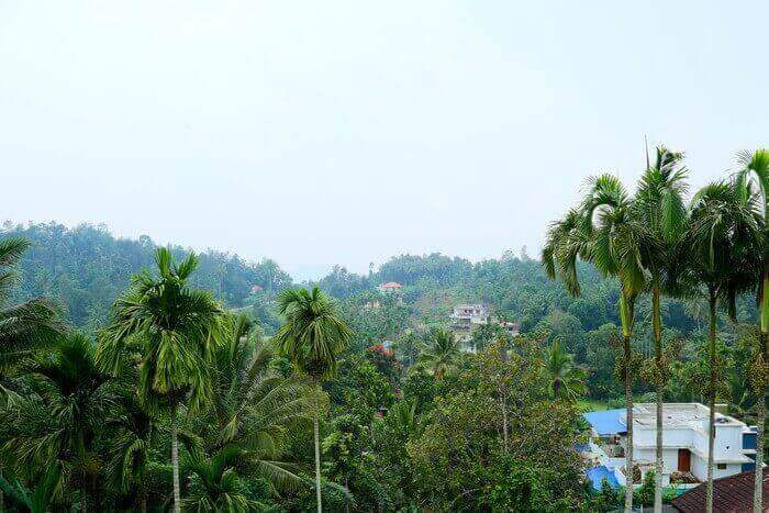 View From Hotels In Wayanad